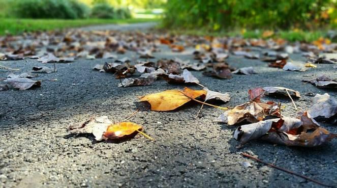 leavesbyme